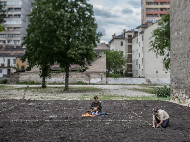 Kállai Márton: Grund kert 3,(részlet a Közösségi kertek című sorozatból), 2015.