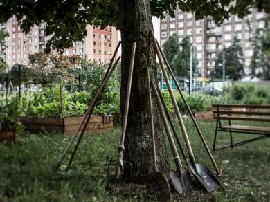 Kállai Márton: Nyírpalota kert,(részlet a Közösségi kertek című sorozatból), 2015.