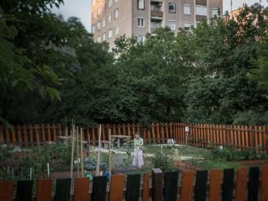 Kállai Márton: Kőrakás parki kert,(részlet a Közösségi kertek című sorozatból), 2015.