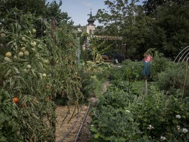 Kállai Márton: Óbor-kör Egyesület kertje Óbuda,(részlet a Közösségi kertek című sorozatból), 2015.