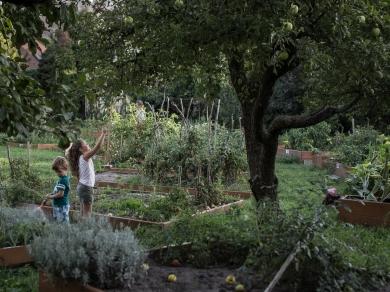 Kállai Márton: Cím nélkül,(részlet a Közösségi kertek című sorozatból), 2015.