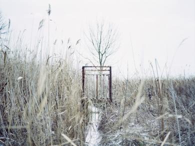 Simon Márk: 10 (részlet a Lacus Pelso - Sekély tó című sorozatból), 2010.