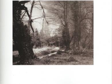 Tengölics László: Panaszkodó fák, 1995.